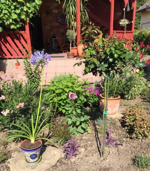kert a terasszal